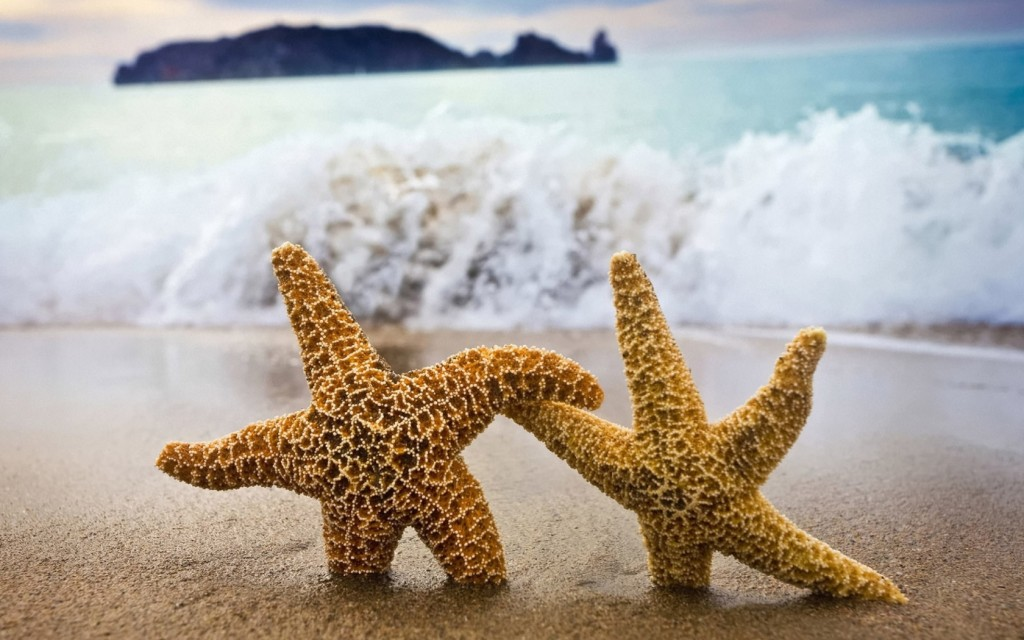 starfishes_wave_sea_escape_rescue_help_sand_coast_beach_cool_52164_1680x1050